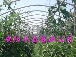 新季度大棚骨架機農業大棚